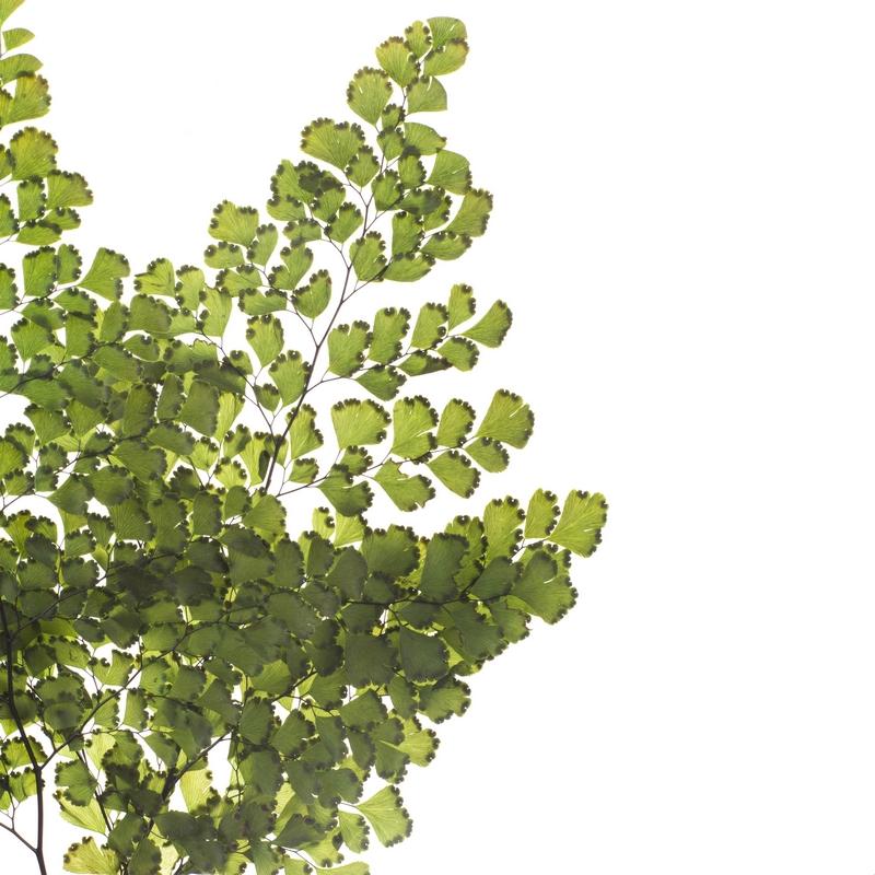 Verdi Sfusi